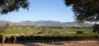 vineyard-rocca